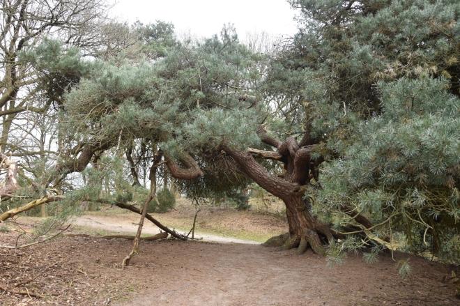 grillige boom in het bos